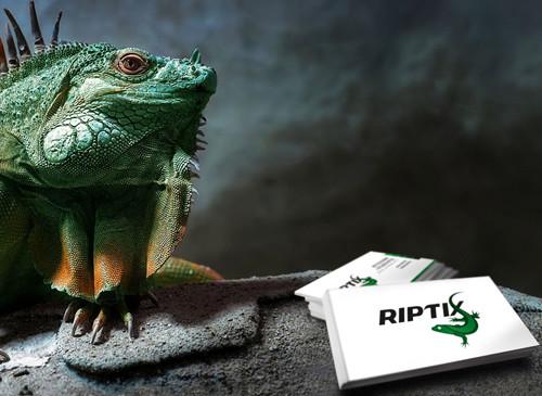 Разработка айдентики Riptix